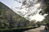 陽明山國家公園:_DSC1691.jpg