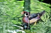 森林鳥花園:DSC_2467.jpg