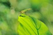 森林鳥花園:DSC_2667.jpg