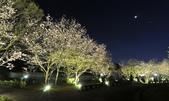 陽明山國家公園:_DSC6100.jpg