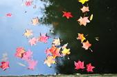 新山夢湖:_DSC9016.jpg