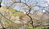 石門水庫梅園:DSC_8489.jpg