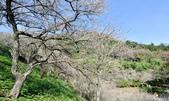石門水庫梅園:DSC_8567.jpg