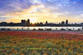迪化跨堤觀景區鐵馬道~:_DSC8371.jpg
