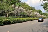 陽明山國家公園:_DSC1599.jpg