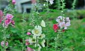 新生公園綠化園區:DSC_6708.jpg