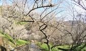 石門水庫梅園:DSC_8495.jpg