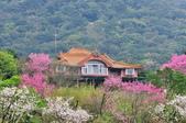 草山竹子湖~:DSC_3199.jpg