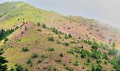 合歡山北峰步道:DSC_2269.jpg