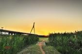 黃金社子橋~:_DSC6239.jpg