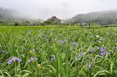 草山竹子湖~:_DSC6613.jpg