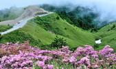 合歡山北峰步道:DSC_2296.jpg