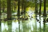 雲山   水人造生態濕地:_DSC3746.jpg