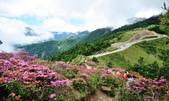 合歡山北峰步道:DSC_2347.jpg