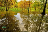 雲山   水人造生態濕地:_DSC0429.jpg