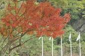 花東-砂卡礑溪步道:_DSC5967.jpg