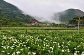 草山竹子湖~:_DSC6443.jpg