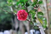 花卉試驗中心.:DSC_0867.jpg