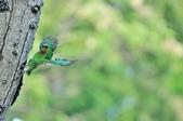 福志公園五色鳥:DSC_0119.jpg