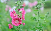 新生公園綠化園區:DSC_6706.jpg
