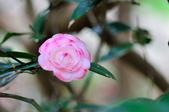 花卉試驗中心.:DSC_0889.jpg