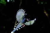 飛羽類~:DSC_0605.jpg