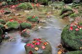 青春嶺(陽峰古道)楓紅~:_DSC9867.jpg