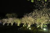 陽明山國家公園:_DSC5878.jpg