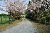 平菁街櫻花道路:DSC_4356.jpg