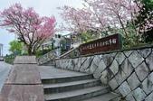 草山竹子湖~:DSC_3082.jpg