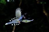 飛羽類~:DSC_0604.jpg