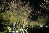 陽明山國家公園:_DSC5869.jpg