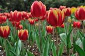 花卉試驗中心.:DSC_0711.jpg