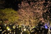 陽明山國家公園:_DSC5874.jpg