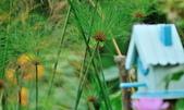 新生公園綠化園區:DSC_6739.jpg