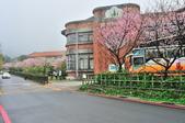 草山竹子湖~:DSC_3127.jpg