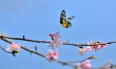 新生公園綠化園區:DSC_4964.jpg