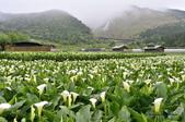 草山竹子湖~:_DSC6662.jpg