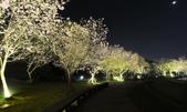 陽明山國家公園:_DSC6108.jpg