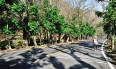 石門水庫梅園:DSC_8449.jpg