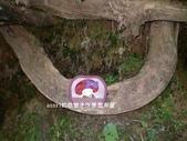 2014與Su的相約-廚娃有約:小小Su蘋果收納袋part1-05.JPG