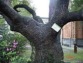 顏貝忠攝影記錄-2009.3.7台大步道(假日生態導覽):DSC00068.JPG