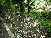 2008.5.3六寮植物篇~洪素娟攝影:2008.5.3六寮 042.JPG