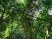 2008.5.3六寮植物篇~洪素娟攝影:P1470005.JPG