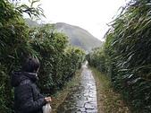 106.11.24-東南科大進階課程-陽明山小油坑竹子湖: