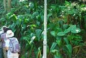 20110.7.24-仙跡岩(解說):06-02-仙跡岩步道解說-大地山林漫遊-110724  (8).JPG