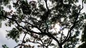 2018.6.3- 協會19周年慶暨第十屆第二次會員大會:自然步道第十屆第二次會員大會_180604_0010.jpg