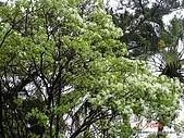 顏貝忠攝影記錄-2009.3.7台大步道(假日生態導覽):DSC00058.JPG