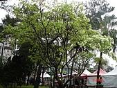 顏貝忠攝影記錄-2009.3.7台大步道(假日生態導覽):DSC00059.JPG