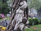 顏貝忠攝影記錄-2009.3.7台大步道(假日生態導覽):DSC00060.JPG